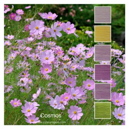 Cosmos ColourStack inspired bby a field of cosmos flowers