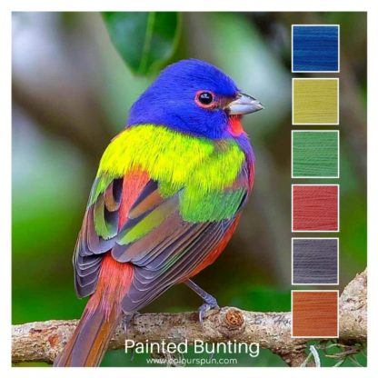 Painted Bunting is a 6 colour Colour Stack inspired by a Painted Bunting bird